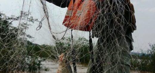 Incautaron espineles y redes de pesca de uso prohibido en Oberá