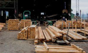 Lenga fueguina, la madera del fin del mundo sale a reposicionarse en el mercado argentino