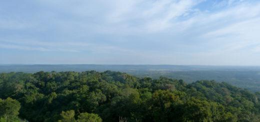 Los bosques tropicales ya no actúan como sumidero de carbono por la deforestación
