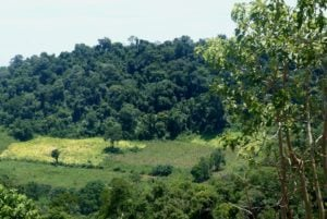FAO: Un 33% de suelo del mundo sufre erosión, agotamiento de nutrientes o contaminación por el uso de agroquímicos