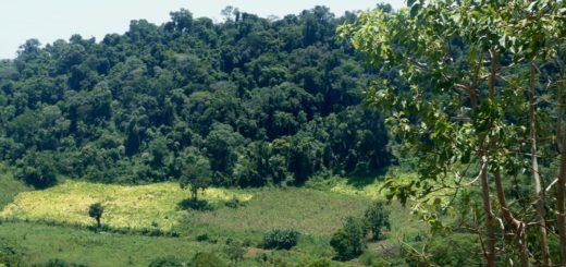 Los bosques y las plantaciones forestales todavía se subestiman como aliados para frenar la pobreza rural