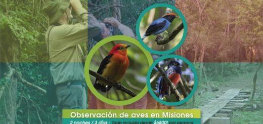 """Turismo Misiones te invita a disfrutar del """"Mes de las Aves"""" con un paquete imperdible cerca de las Cataratas del Iguazú"""