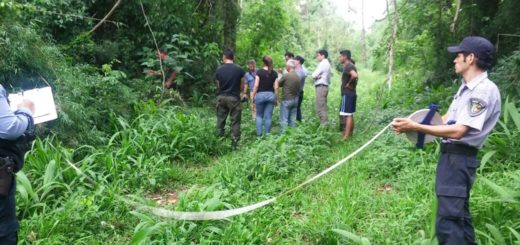 Mañana declara como testigo un referente de Red Yaguareté por la muerte del ejemplar cazado en Libertad