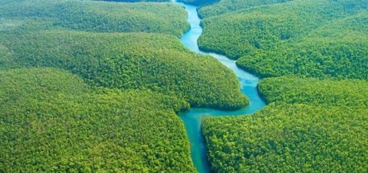Proyecto forestal más grande del mundo: plantarán 73 millones  de árboles en la Amazonía brasileña