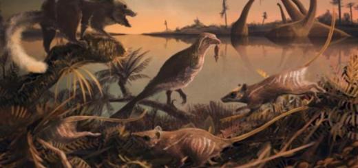 Un nuevo hallazgo de la era de los dinosaurios probaría el remoto ancestro del hombre