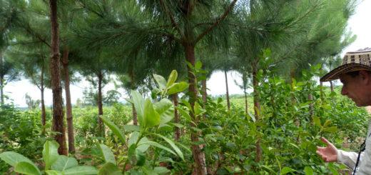 En la sede de INTA Eldorado presentarán hoy el Manual de Buenas Prácticas de la Actividad Forestal