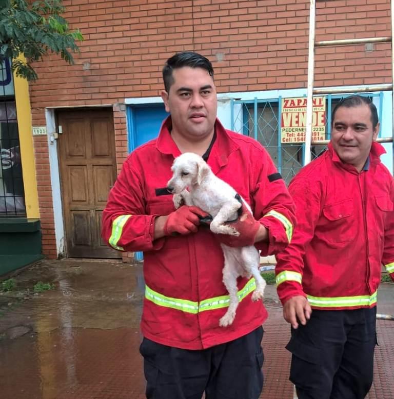 Bomberos rescataron a perro abandonado en balcón de un segundo piso