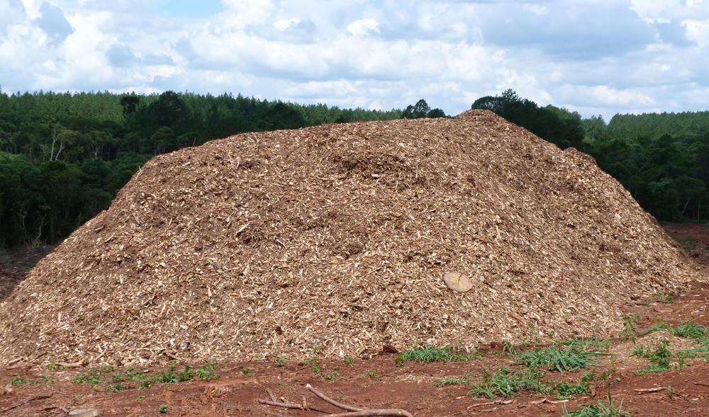 NEA: Grupo ADBlick Agro expande sus negocios con un millonario plan de inversión en plantas de generación de energía con biomasa forestal en la región