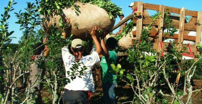 Cruce entre asociaciones de productores: Yerbateros de San Pedro se oponen al paro de cosecha y cuestionan a Peterson