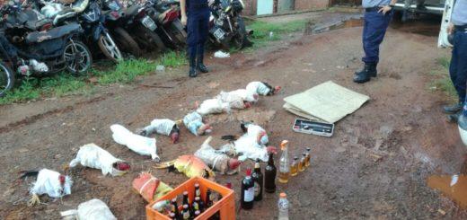 Drogaban gallos de riña y apostaban en las peleas: 20 personas detenidas en Dos de Mayo