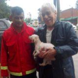 Corrientes: Quemaron el cuerpo de una yeguapara borrar las pruebas de maltrato animal