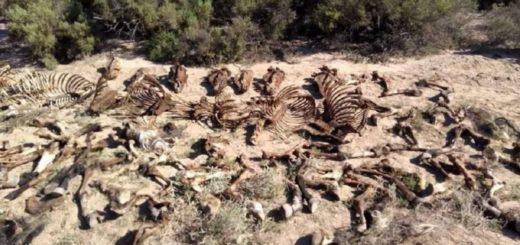 Horror en Mendoza: hallaron un matadero clandestino de caballos