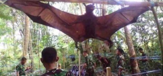 De película: capturaron a un murciélago gigante de casi 2 metros