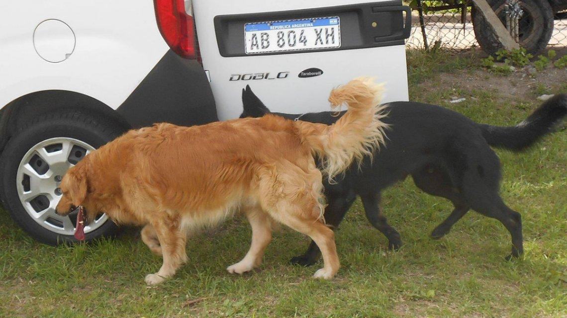 Maltrato animal: proponen instalar frigoríficos para comercializar carne de perro en Río Gallegos