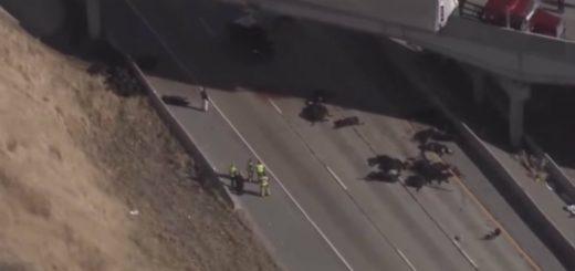 Video: Un camión volcó sobre un puente y 25 vacas murieron tras caer de la autopista