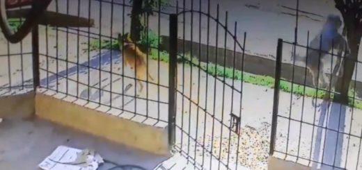 Maltrato animal: fue escrachado por revolear un perro contra una reja