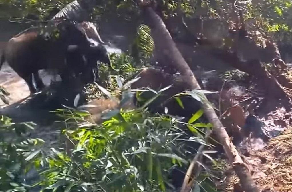 Mirá el increíble gesto de un elefante en la India hacia unos trabajadores que lo ayudaron