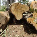 Anhelos y expectativas de los empresarios de la cadena foresto-industrial para lograr una real reactivación del sector en 2018