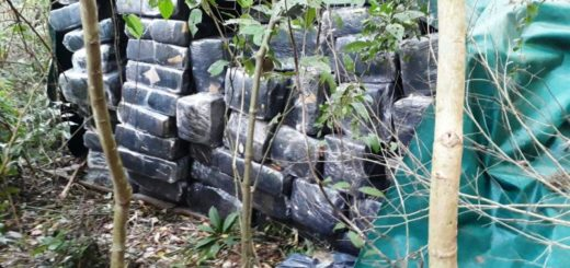 Operativo Navidad Verde: la Policía de Misiones incautó más de 3, 5 toneladas de marihuana y detuvo a dos narcos