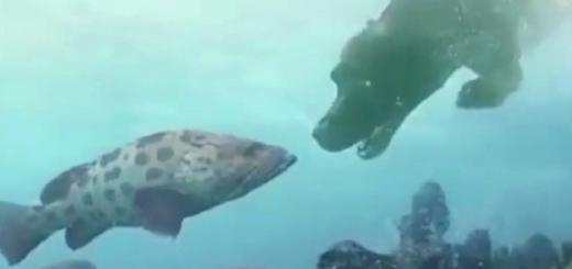 Descubrieron un método que permite respirar debajo del agua y podría salvar vidas