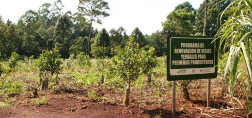 Técnicos de Agroindustria, INYM e INTA evaluaronel Programa de Renovación de Viejos Yerbales