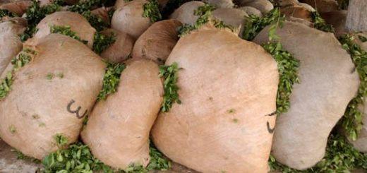 El INYM clausuró dos secaderos por no respetar la suspensión de cosecha y secanza de yerba mate