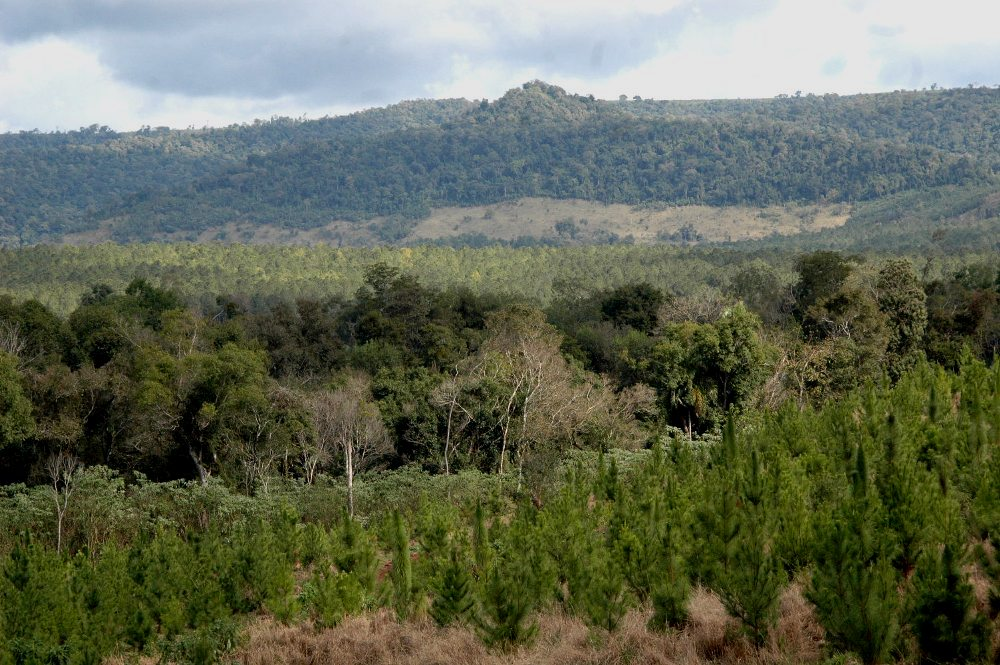 Misiones planteará en la reunión de Comisión Asesora de la Ley 25.080 la prórroga de la operatoria para los pequeños productores forestales