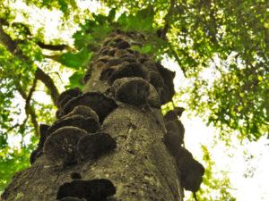 A 10 años de la sanción de la ley de Bosques Nativos, Ambiente anunció que implementará el fondo fiduciario con destino a conservación