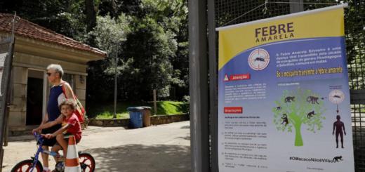 """Advierten que la epidemia en Brasil puede """"reintroducir"""" la fiebre amarilla en la Argentina"""