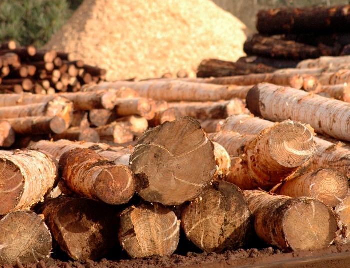 Mesa Forestal Nacional: en abril estaría listo el anteproyecto para prorrogar la Ley 25080