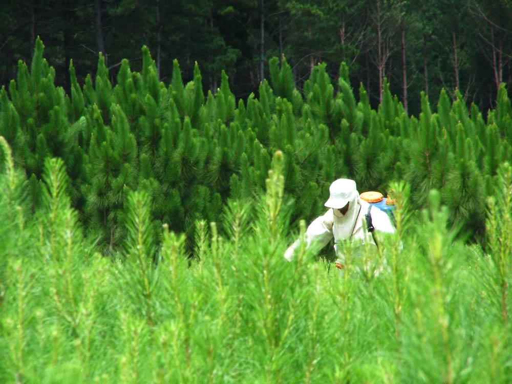 La foresto-industria argentina adhirió a los objetivos de la Agenda 2030 y se alineará al plan de desarrollo sostenible de Naciones Unidas