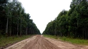 El Estado Nacional convoca por medio de licitación pública a forestar un campo de mil hectáreas en Corrientes