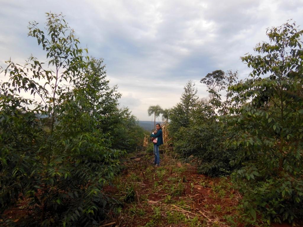 """Jorge Pujato:""""La campaña forestal 2018 ya está prácticamente perdida, y van 11 años en caída"""""""