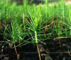 En Misiones se foresta cerca de 15 mil hectáreas por año y pedirán simplificación en la Ley 25.080 para recuperar a los pequeños productores