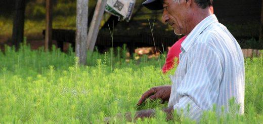 Ley 25.080: Nación publicó actualización de costos de plantaciones y tratamientos silviculturales de planes forestales