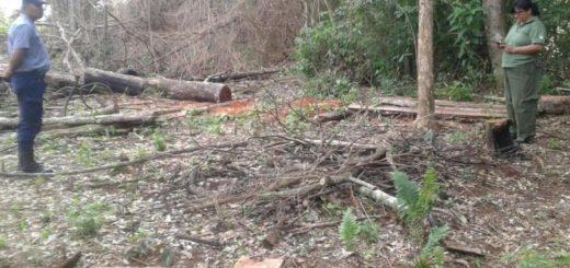 Apean de manera ilegal especies nativas en un predio privado de Puerto Iguazú
