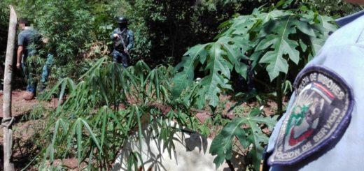 Atrapan a un motodealer y localizan un vivero de marihuana en Cerro Azul