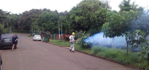 Redoblan esfuerzos para combatir al Aedes aegypti en Iguazú