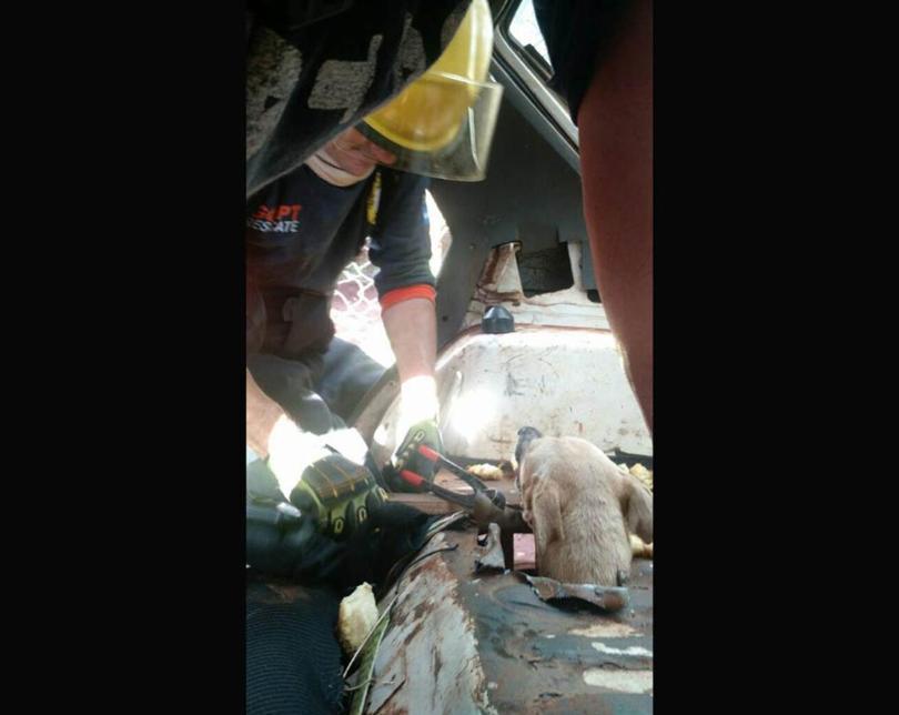 Bomberos voluntarios de Iguazú trabajaron una hora para liberar a una perra atascada en un auto abandonado