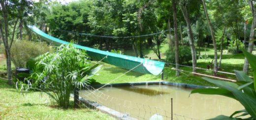 Verano en Misiones: el camping Maksys propone un espacio natural para pasar un fin de semana en Oberá