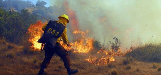Chile: alrededor de 1.800 hectáreas fueron arrasadas por un incendio forestal en la Araucanía