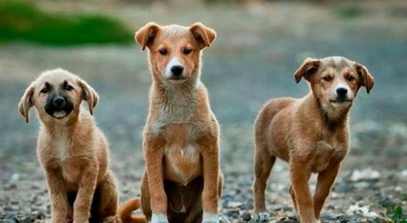 Buscan cambiar una ley nacional para pedir la cárcel por maltrato animal