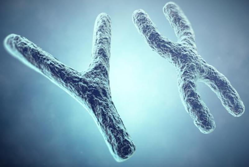 """Aseguran que el cromosoma """"Y"""" está desapareciendo"""