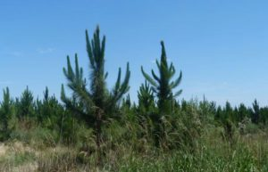 Eldorado: Encuentro para el sector foresto-industrial es organizado por Cambiemos