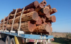 La ordenación forestal sostenible sigue siendo una materia pendiente en Chaco y la prórroga de la Ley 25.080 una oportunidad