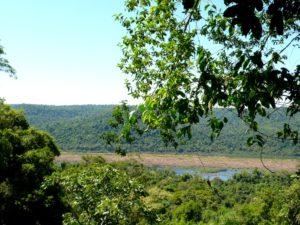 Las imágenes que te invitan a conocer en febrero la selva misionera en el destino Moconá, uno de los preferidos del país