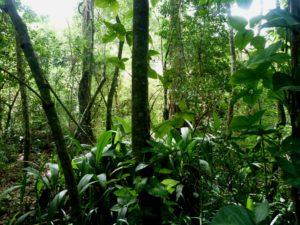 Rainforest Alliance y NEPCon unirán su misión y formarán el organismo de certificación de sostenibilidad más grande del mundo