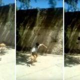 Posadas: lo filmaron maltratando a su perro y reaccionó rompiendo un portón que cayó sobre su vecina