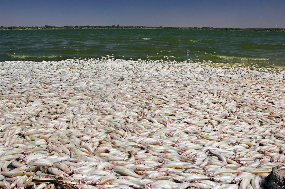 Preocupación por la aparición de miles de peces muertos en una laguna de La Pampa