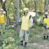 Paraguay declaró la emergencia epidemiológica por el dengue: Encarnación tiene 400 casos sospechosos